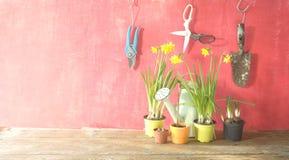 Printemps faisant du jardinage, jeunes fleurs, ustensiles de jardinage, lumière du soleil Image stock