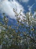 Printemps, paix, beauté de nature photographie stock libre de droits
