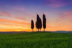 Printemps typique de paysage de la Toscane d'arbres de Cypress au lever de soleil Photographie stock libre de droits
