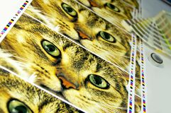 Printing press control. CMYK test printed on white paper. Inkjet print with funny cat picture royalty free stock image