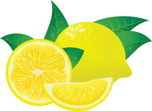 PrintRipe lemon with pieces and leaves. The stylized lemons for design of packing stock illustration