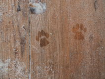 Prints of cat paws Royalty Free Stock Photography