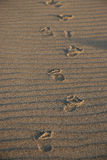 Prints in the sand. Toddler footprints in windblown sand Stock Photo