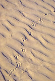 Prints in the Sand Royalty Free Stock Photos