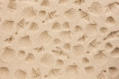 The prints of seashells on the sand Royalty Free Stock Photography