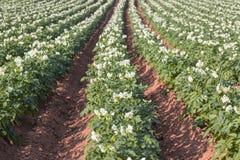 Prinz Edward Island Farm Fields Lizenzfreies Stockfoto