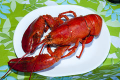 Prinz Edward Island Lobster - Kanada stockfotografie