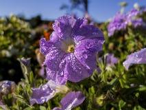 Prinz Park in Aranjuez Lizenzfreies Stockfoto