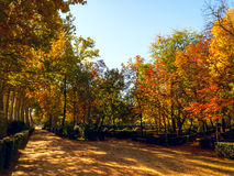 Prinz Park in Aranjuez Stockbilder