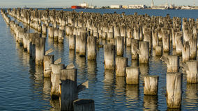 Prinzen Pier, Melbourne, Australien stockfotos