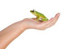 Prinzfrosch auf ihrer Hand Stockfoto