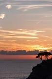 Priorità alta degli alberi di tramonto del mare Immagini Stock Libere da Diritti