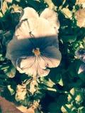 Priorità alta del fiore Fotografia Stock Libera da Diritti