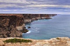 Priorità alta del SA Cliff Plant Immagine Stock Libera da Diritti