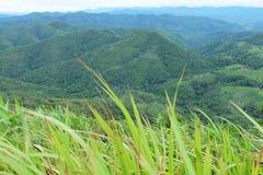 Priorità alta dell'erba e della montagna Fotografia Stock