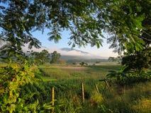 Priorità alta della struttura dell'albero che mostra scena di mattina del campo del raccolto, fiume Immagini Stock