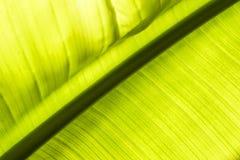 Priorità alta di una foglia di palma Fotografia Stock Libera da Diritti