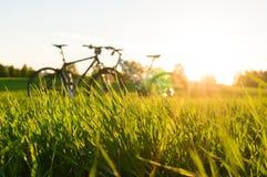 priorità alta e biciclette dell'erba Fotografia Stock