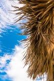 Priorità alta - ombrello della palma & cielo tropicale del fondo Fotografie Stock