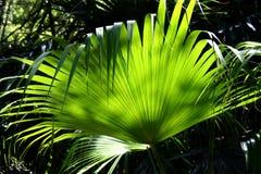 Priorità bassa 3 della foresta pluviale Immagine Stock Libera da Diritti