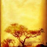 Priorità bassa africana di Grunge con l'albero. Fotografie Stock