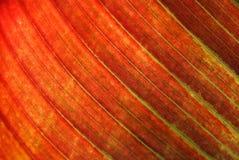 Priorità bassa arancione del foglio Fotografie Stock Libere da Diritti