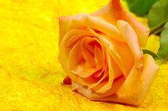 Priorità bassa arancione della Rosa Fotografia Stock Libera da Diritti