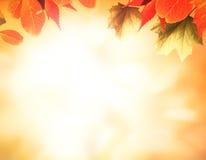 Priorità bassa arancione di autunno Immagini Stock