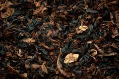 Priorità bassa aromatica del tabacco da pipa. Fotografia Stock