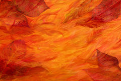 Priorità bassa artistica dei fogli di autunno Fotografia Stock
