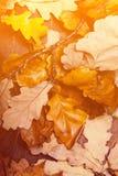 Priorità bassa astratta con i fogli di autunno Autunno caduto giallo Fotografia Stock Libera da Diritti