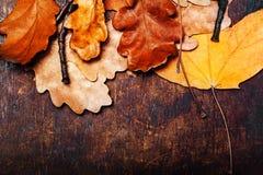 Priorità bassa astratta con i fogli di autunno Autunno caduto giallo Fotografie Stock Libere da Diritti