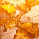 Priorità bassa astratta con i fogli di autunno Autunno caduto giallo Fotografia Stock