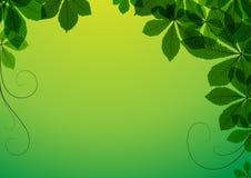 Priorità bassa astratta con i fogli verdi Fotografia Stock Libera da Diritti