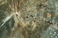 Priorità bassa astratta degli anelli di albero Fotografie Stock