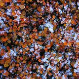Priorità bassa astratta dei fogli di autunno Fotografie Stock Libere da Diritti