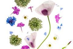 Priorità bassa astratta del fiore Fotografie Stock
