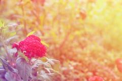 Priorità bassa astratta del fiore Fiori fatti con i filtri colorati Fotografia Stock Libera da Diritti