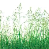 Priorità bassa astratta dell'erba di prato isolata Immagine Stock