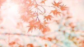 Priorità bassa astratta di autunno Fotografie Stock