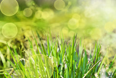Priorità bassa astratta di estate con erba Fotografia Stock Libera da Diritti