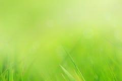 Priorità bassa astratta e molle dell'erba Fotografie Stock Libere da Diritti