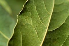 Priorità bassa astratta - fogli organici di verde Immagini Stock