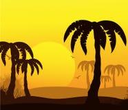 Priorità bassa astratta tropicale con le palme Fotografia Stock Libera da Diritti