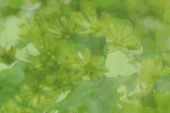 Priorità bassa astratta verde Fioritura e pianta La sorgente è dappertutto Fotografie Stock