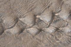 Priorità bassa bagnata della sabbia Immagini Stock Libere da Diritti