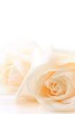 Priorità bassa beige delle rose Fotografia Stock Libera da Diritti
