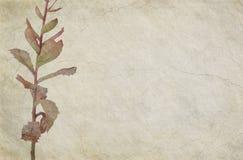 Priorità bassa beige incrinata di tema floreale Fotografie Stock