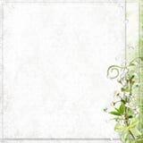 Priorità bassa bianca con i fiori del ciliegio royalty illustrazione gratis