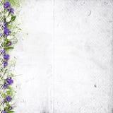 Priorità bassa bianca con i fiori viola della sorgente illustrazione di stock